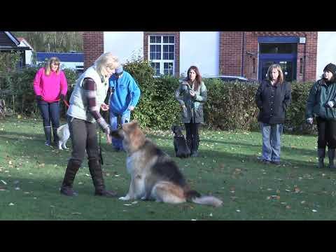 Specialist Dog Training - YouTube