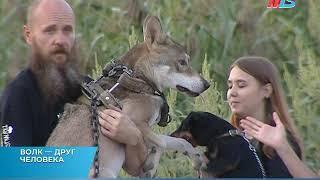 В одной из многоэтажек Краснооктябрьского района Волгограда поселился волк