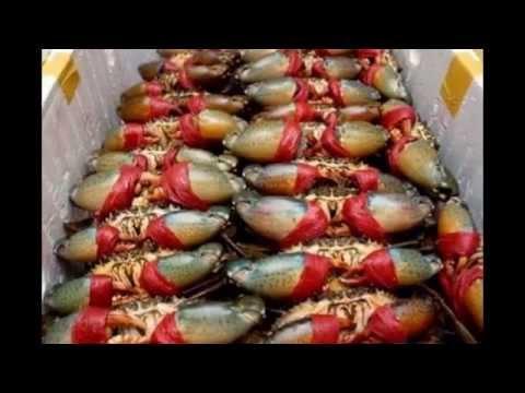 """hải sản giá sỉ """" hải sản HOÀI LINH"""""""