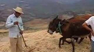 preview picture of video 'Tourisme solidaire (moisson traditionnelle -Maroc)'