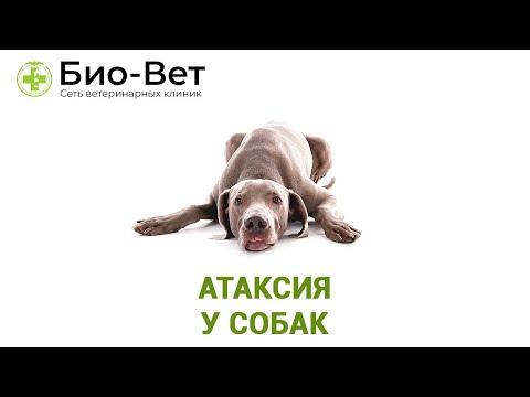 Атаксия у собак. Ветеринарная клиника Био-Вет.
