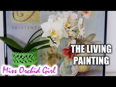 DIY Orchid arrangements – The living painting!