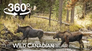 Best of Wild Canada (360 Video) | Wild Canadian Year