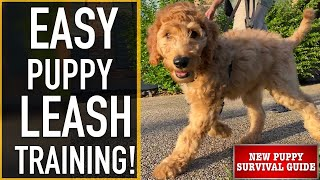 NEW PUPPY SURVIVAL GUIDE: How To Leash Prepare Your Pet!