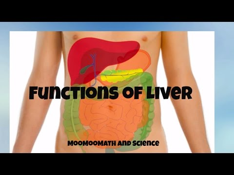 Download Main functions of the Liver- Why the liver is important? HD Mp4 3GP Video and MP3