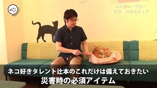 猫好きタレント辻本耕志の猫ハウツー猫を守る災害時の必須アイテム|@Heaaartアットハート