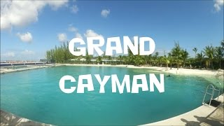KARIBIEN 2017: Badar Med Delfiner På Grand Cayman (Vlogg 4)