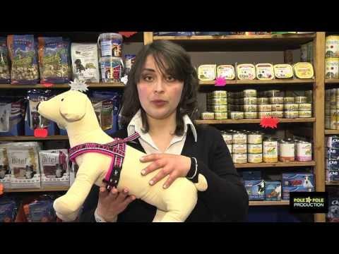 Tutorial - La pettorina giusta per il cane