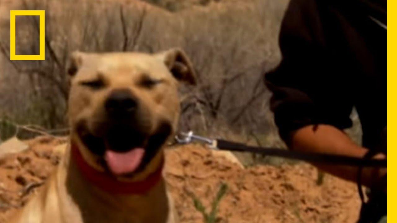 Vick Dog Rehab | National Geographic thumbnail