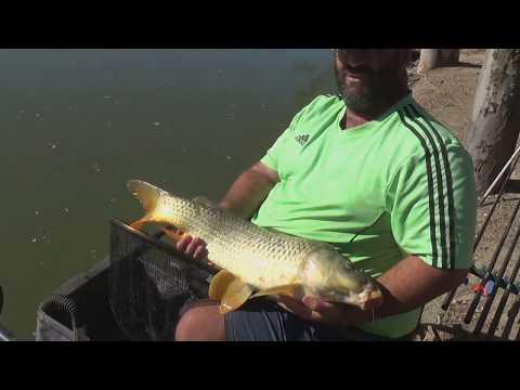 La pesca in un predatore su by-pass una posizione di testa