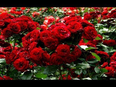 , title : 'أسماء أشهر أنواع الزهور  والورود بالعربية والإنجليزية والفرنسية