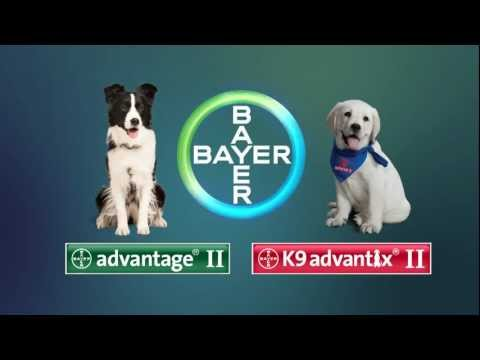 12 MONTH K9 Advantix II TEAL for Medium Dogs (11-20 lbs) + Tapeworm Dewormer for Dogs (5 Tablets) Video