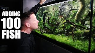 100 FISH ADDED to planted aquarium! The king of DIY