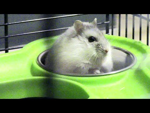 🐹 AWESOME HAMSTER MAZE [New Home]