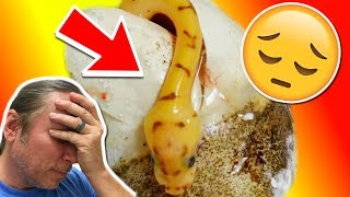 CUTTING SNAKE EGGS AND FOUND A DEAD SNAKE :( | BRIAN BARCZYK