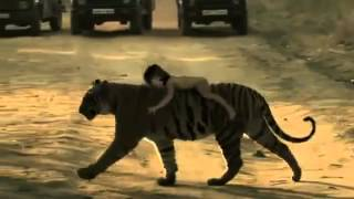 Туристы случайно засняли настоящего Маугли. Прикол!!!