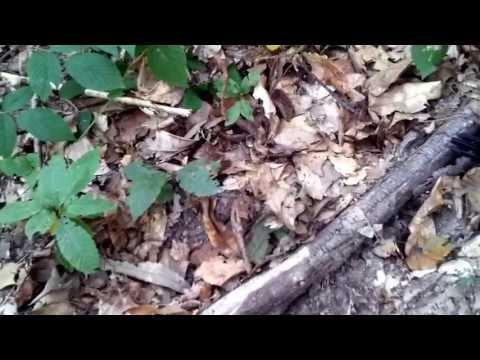 Complicazioni di fungo di piede