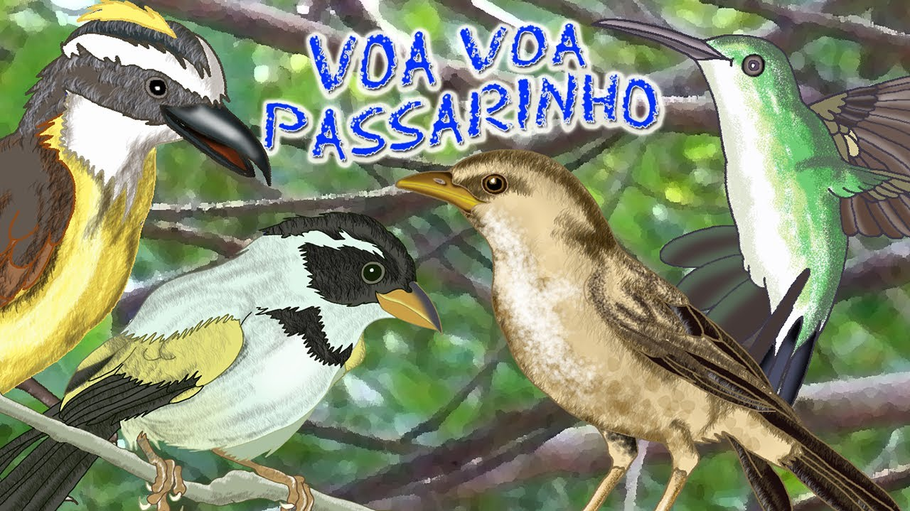 VOA VOA PASSARINHO - Clip Infantil