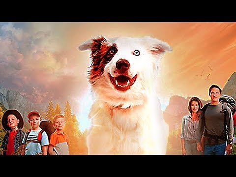 The amazing wizard of paws trailer