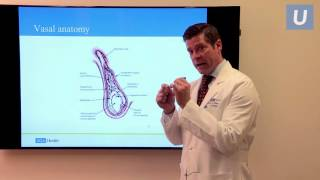 Vasectomy Reversal: Fertility Options After Vasectomy | Jesse Mills, MD | UCLAMDChat