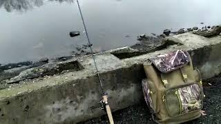 Ловля подкаменщика на канале им москвы