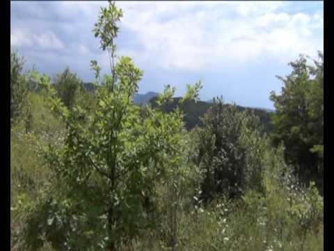 Седовласый Кавказ