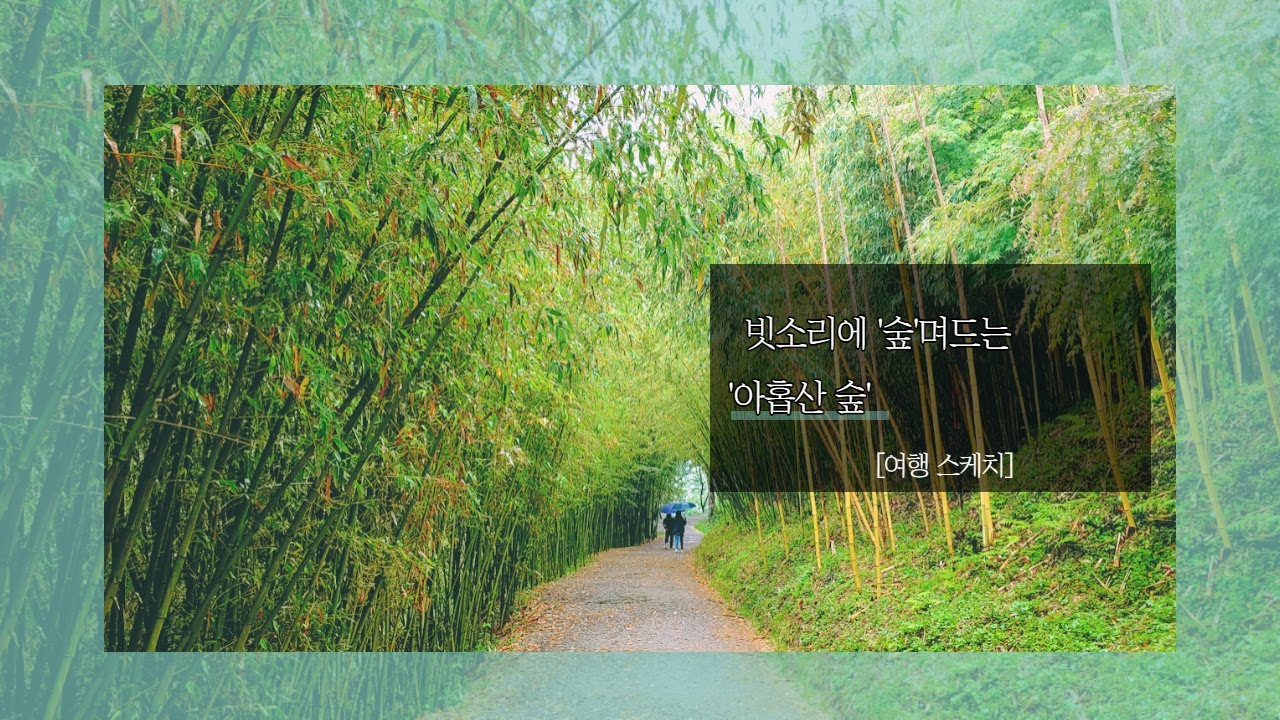 빗소리에 '숲'며드는 아홉산 숲