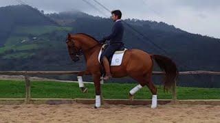 SOLD !!! LUSITANO HORSE FOR SALE - PIAFFE-PASSAGE - PIRO FREE