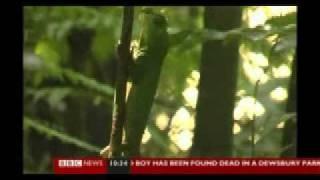 Amazon Rainforest Wildllife Destroyed