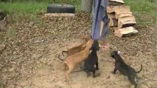 Floyd boudreaux puppy sold! - YouTube