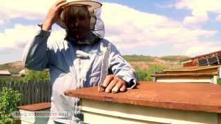 Смотреть онлайн Пчеловодческие хитрости для начинающих пасечников