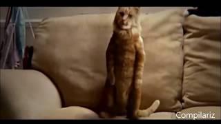 Ржач Приколы с кошками. Танцующие коты.