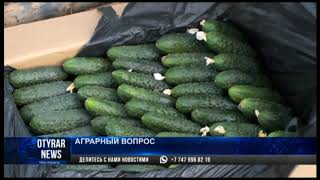 Проблемы с экспортом продукции возникли у аграриев Туркестанской области