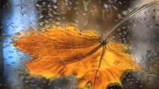 Осенний лес Красивое видео