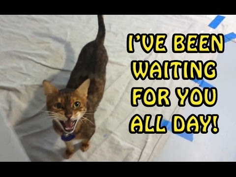 Meow! Where Have You Been? Hilarious Cat Compilation