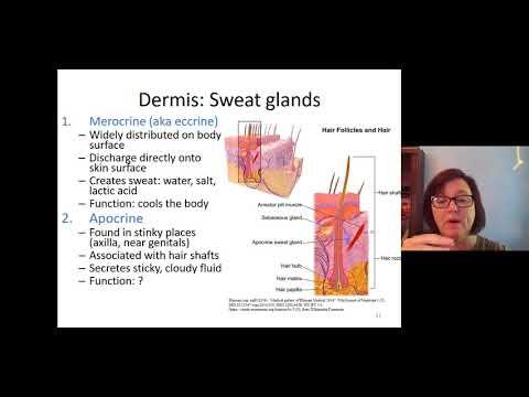 Horoghernyó fertőző betegségek