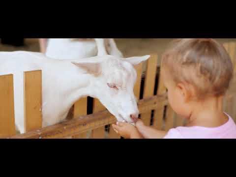 Kabrita 2 Адаптированая сухая молочная смесь на основе козьего молока, 400г