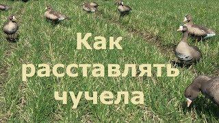 Как правильно расставить гусиные чучела на охоте