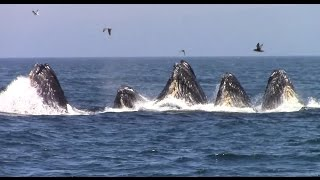 Best of Whale Watching, Monterey California as of 7.16.2016
