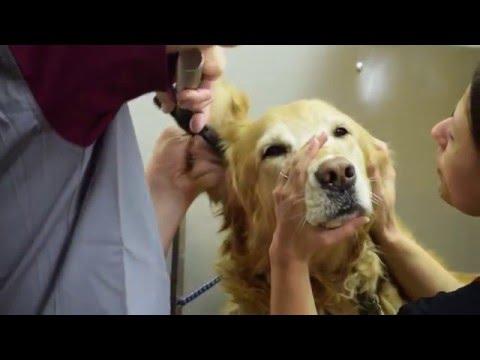 Bradford Animal Hospital Documentary