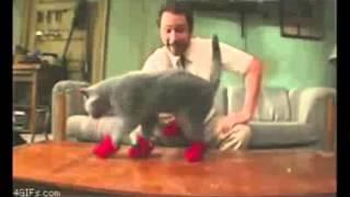 Смешные приколы с животными