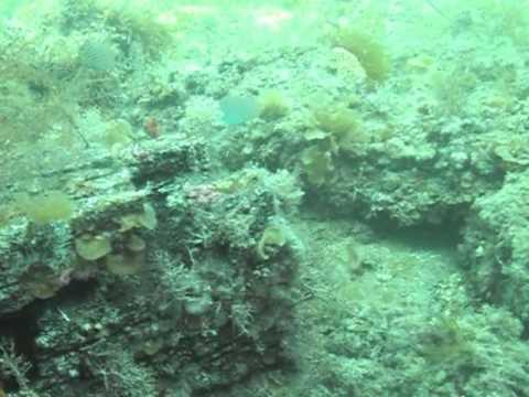 Busselton Jetty Scuba Dive, Busselton Jetty,Australien