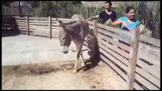 Salida al Zoo de Bs As