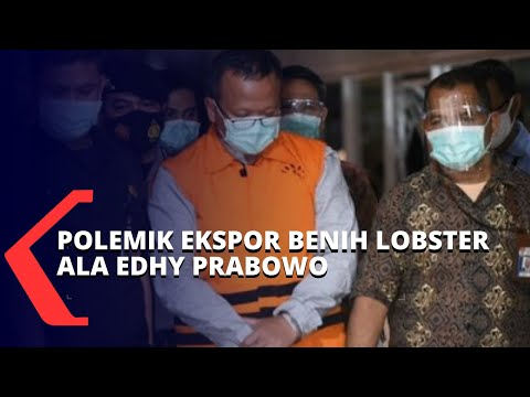 polemik kebijakan ekspor benih lobster berujung penetapan edhy prabowo sebagai tersangka