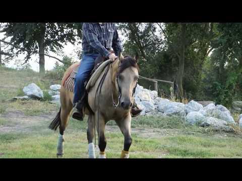 Lattivatore di cavallo per un cavallo