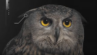 How Does An Owls Hearing Work? | Super Powered Owls | BBC