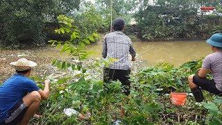 Đào giun đất đi câu  cá rô đồng cá trê  giật mỏi tay