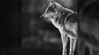 Shay – PMW (Dj Yasin Beyaz Remix 2K16)