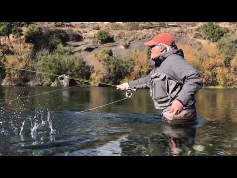 Chasing Brown Trout