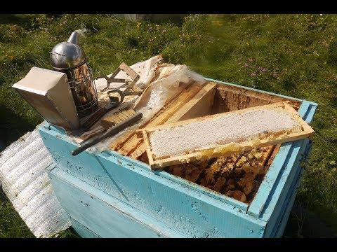 Сколько взял меда с пасеки и одной семьи. Забираем мед у пчел. Итог медосбора 2018 года